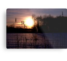 Dawn Through the Reeds Metal Print