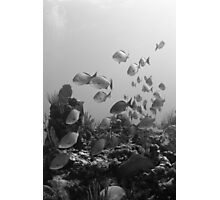 Fish flyby (B&W) Photographic Print