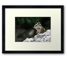 Living a good life under the bird feeders Framed Print