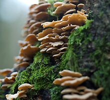 Tree Reef Fungus- Forest of Dean by simon Olewicz