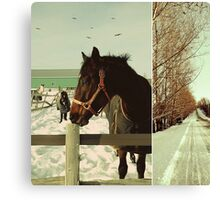 Winter Horses II Canvas Print