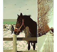Winter Horses II Photographic Print