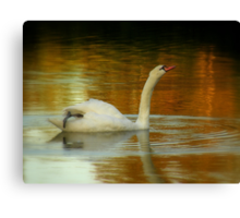 Dance Of The Swan Canvas Print