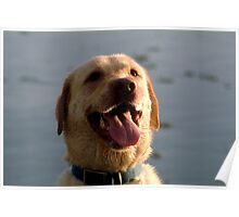 Happy lab at the beach Poster