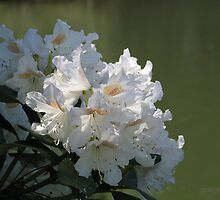 White Rhodies by the River by art2plunder