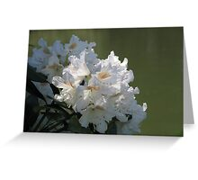 White Rhodies by the River Greeting Card