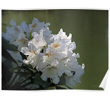 White Rhodies by the River Poster