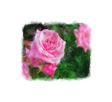Pink Roses in Anzures 1 Sketchy by Christopher Johnson