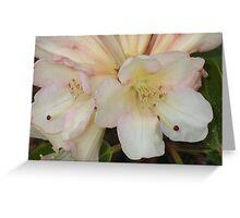Pale Peach Rhodies Greeting Card