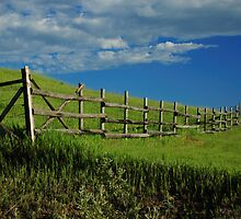 Fenceline in Spring by OsoAzulDesign