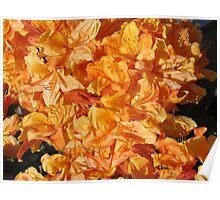 Bright Orange Azaleas Poster