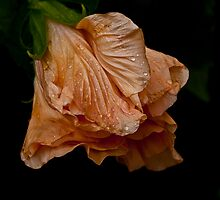 Wet and Wilted by Melissa Gurdus