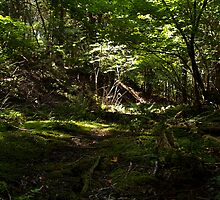 forest floor by Daniel MacGibbon