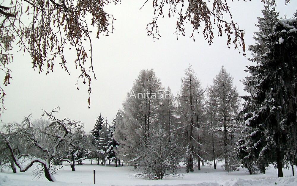 Snow scene in Adazi, Latvia by Anita52