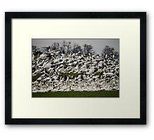 Snow Geese of Skagit Valley Framed Print
