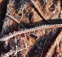 Crystalized Leaf by CrisPizzio