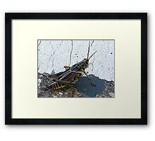 King Hopper Framed Print