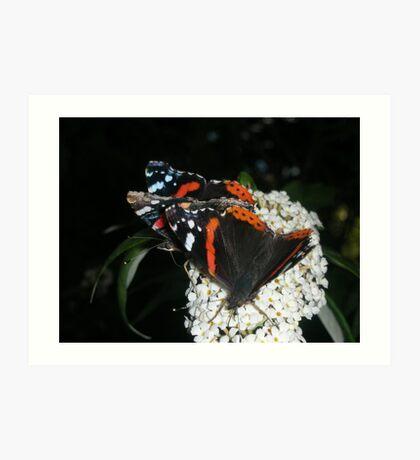 butterfly mealtime Art Print