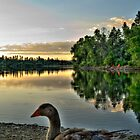 Goose at lynx lake HDR by Kgphotographics