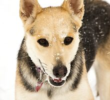 Snow Loving by Trudy Wilkerson