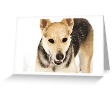 Snow Loving Greeting Card