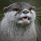 Otterly Content by ellismorleyphto