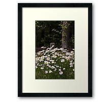 Daisy Garden ~ White Daisies ~ Flowers Framed Print