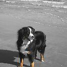 Einstein at the Beach by Christine  Wilson