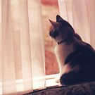 CALICO IN THE WINDOW by dragonindenver
