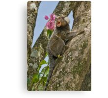 Marmoset Canvas Print