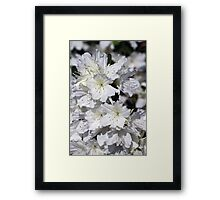 White Azalea Flowers ~ Azalea Bursts Framed Print
