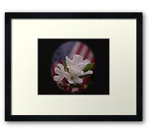 American Beauty ~ American Flag with White Azalea Flowers Framed Print
