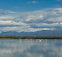 Flamingos at the Lagoon in El Calafate, Argentina by Jean Meile