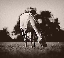 Horse in Field by Robyn Liebenberg