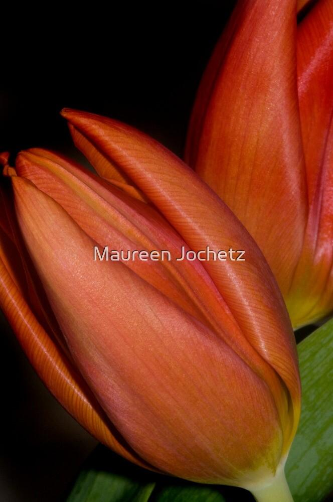 Tulips 1 by Maureen Jochetz
