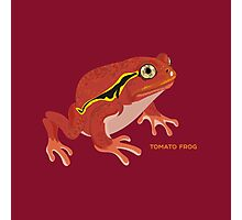 Frogs: Tomato Frog Photographic Print