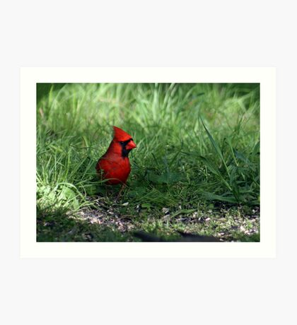 Northern Cardinal In My Backyard Art Print