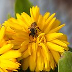 The Busy Little Bee by Timothy L. Gernert