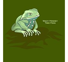 Frogs: Waxy Monkey Tree Frog Photographic Print