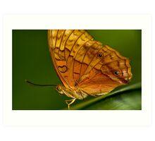 Cruiser Butterfly Art Print