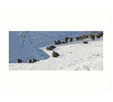 Snoozing in the Winter Sun Art Print