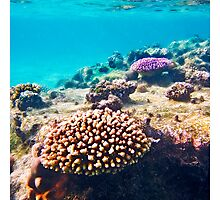 coral colours - rarotonga cook islands by David Sarkin