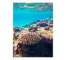 coral colours - rarotonga cook islands Photographic Print