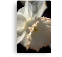 LOVE Daffodils Canvas Print