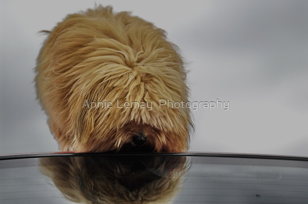 Gizmo's Reflection by Annie Lemay  Photography