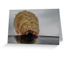Gizmo's Reflection Greeting Card