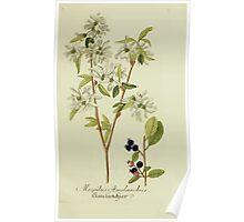 Plantarum Indigenarum et Exoticarum - Lukas Hochenleitter und Kompagnie 1788 - 404 Poster