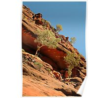 Palm Valley,near the West McDonell Ranges,N.T. Poster