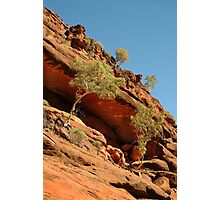 Palm Valley,near the West McDonell Ranges,N.T. Photographic Print