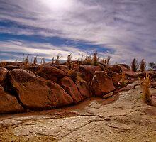 Grass and Rocks by Pene Stevens